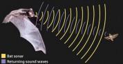 Ultrahangos hibakereső vizsgálat JVT 07